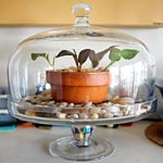 Use a Glass Cake Dome as a Terrarium