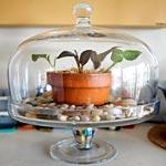 Use a Glass Cake Dome as a Terrarium