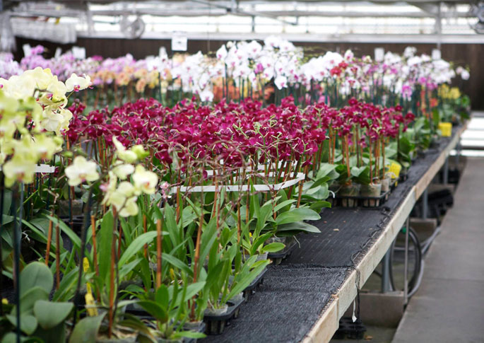 Norman's Orchids