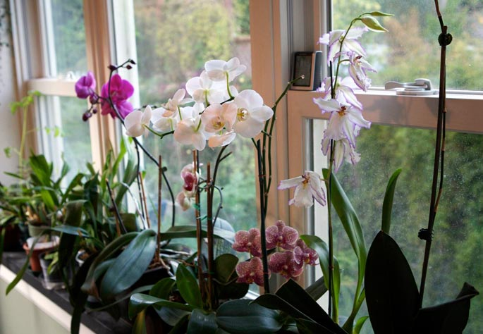 Plantgasm yes you can grow orchids How do you care for orchids after they bloom
