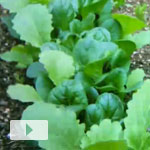 Vegetable Garden Timelapse 2