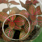 Make a Fittonia Bubble