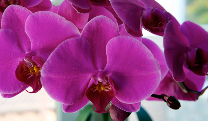 Orchidshowto blogspot further Watch additionally 194077065171584507 moreover Dendrobiumphalaenopsiscare furthermore Presidents Message July 1 2015. on repotting orchids