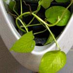 Beautiful, Modern Planter Idea from Thailand