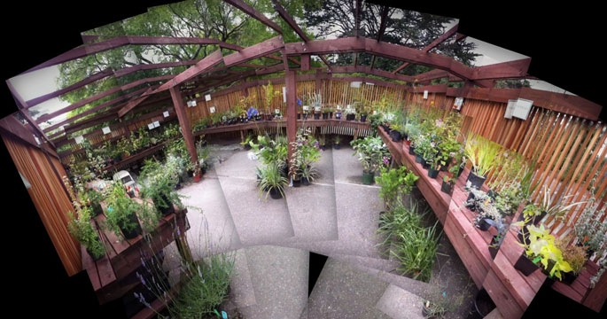inside the arbor