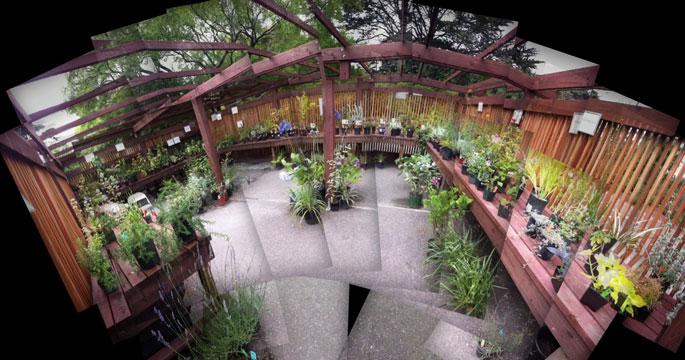 inside the arbor