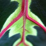 Tube Planter and Blooming Maranta