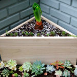 My New Two-Tier Low-Water Triangle Planter